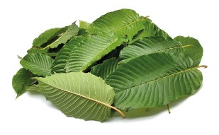 Kratom Leaf Red Vein